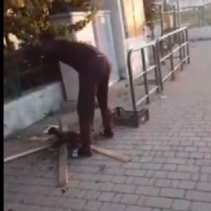 بعد واقعة شوي قطة في الشارع.. مشاهد مرعبة للتعامل مع الحيوانات (فيديو)