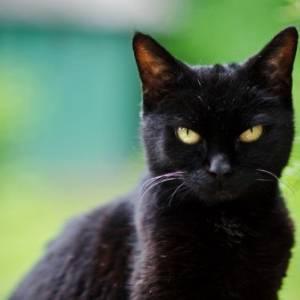 هل يتمثل الجن في جسد القطط السوداء؟.. أزهري يجيب