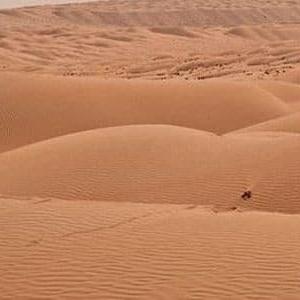 بعد شائعة أسد أسيوط.. ما الحيوانات المفترسة المتواجدة في صحراء مصر؟