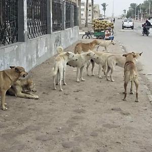 الكلاب تحاصر سكان