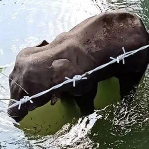 """نفوق فيلة رفض الأهالي مساعدتها وأطعموها """"أناناس مفخخ"""""""