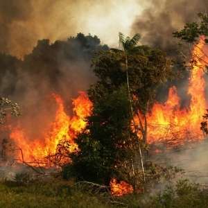 """كارثة """"رئة الأرض"""".. حرائق غابات الأمازون الممتدة منذ أسبوع تهدد البشرية"""