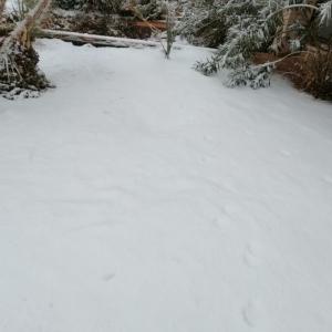 """الحياة تحت الصفر.. 21 صورة من مدينة مصرية تغطيها الثلوج """"كأنها أوروبا"""""""