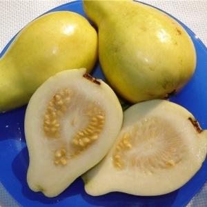 مقاومة للسرطان والشيخوخة وتقي من الإمساك.. 10 فوائد للجوافة