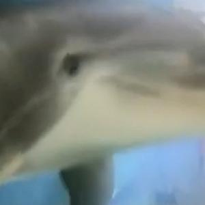 شركة أمريكية تبتكر دولفين آليا يحاكي حركة الحيوانات الحقيقية (فيديو)