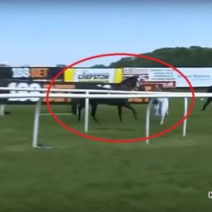 بالفيديو  مذيعة تسيطر على حصان هائج على الهواء مباشرة