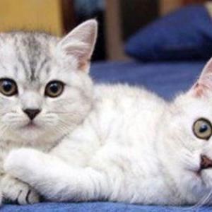 أطباء صينيون يعثرون على فيروس كورونا داخل أجساد القطط