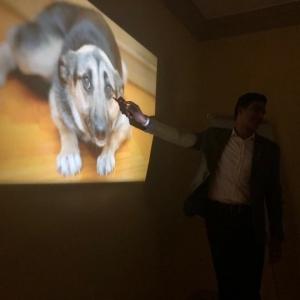 كورسات تدريبية للكلاب في مصر للتعامل مع التواليت: النفسية بتفرق