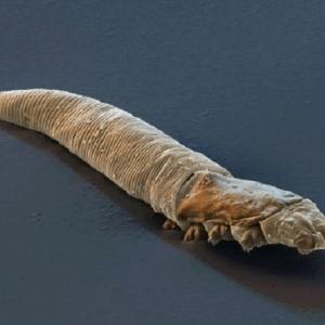 كيف تتخلص من حشرة تعيش على