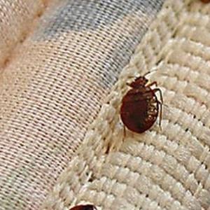 احذر منها.. هذه الرائحة تشير لوجود حشرة البق في المنزل
