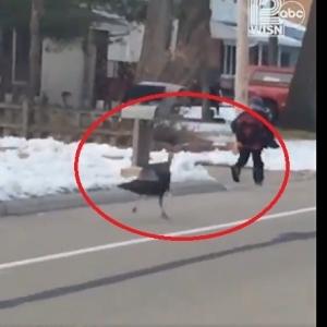 بالفيديو| مقطع طريف لتلميذ وقع ضحية ديك رومي
