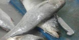 ضبط 1075 كيلو أسماك مجمدة مجهولة المصدر في الفيوم