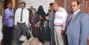 توزيع 60 رأس غنم على الأسر الأكثر احتياجا بسوهاج