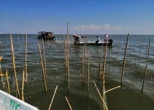 صور.. استمرار حملة إزالة التعديات ومواجهة الصيد الجائر ببحيرة البرلس