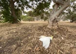 نتيجة درجات الحرارة العالية.. الطيور تتساقط ميتة من السماء بأستراليا