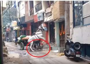 بالفيديو| هجوم وحشي من كلب على حصان يثير الغضب على مواقع التواصل
