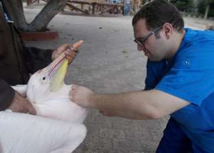 وفاة مواطنة أردنية إثر إصابتها بإنفلونزا الطيور في مدينة معان