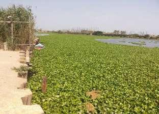 """""""الري"""" تنفذ برنامجا لمقاومة الحشائش المائية في بحيرتين بأوغندا"""
