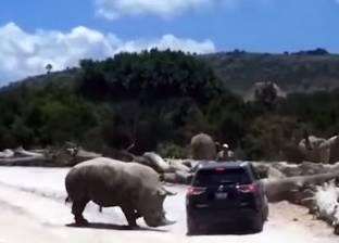 فيديو.. آخرهم وحيد القرن.. حيوانات غاضبة تهاجم الأشخاص