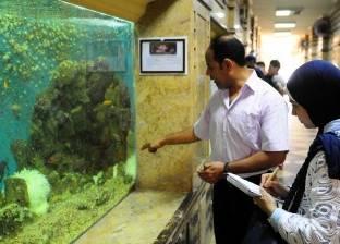 «بيكاسو وجحا والحوت ذو الزعنفة» فى متحف نوادر البحرين «الأحمر والمتوسط»