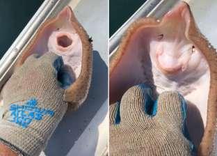 «بتضحك زي البشر».. سمكة تحصد ملايين المشاهدات على «تيك توك»