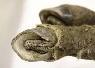 """اكتشاف طيور محنطة لـ""""بطريق آديلي"""" نفقت قبل 750 سنة"""