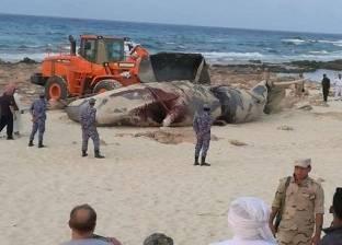 """""""البيئة"""" تنفي العثور على حوت اخر على شواطئ الأسكندرية"""
