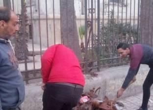 إدارة الحدائق بحي الجمرك بالإسكندرية تتابع أعمال تقليم الأشجار