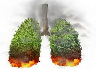 """غابات الأمازون تحترق.. كل ما تريد معرفته عن """"رئة الأرض"""""""