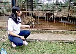 """فيديو.. ذهبت لتلقط سيلفي مع """"النمر"""" فعادت دون ذراعها"""
