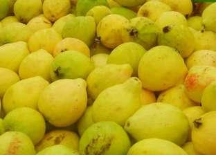 استقرار في أسعار الفاكهة.. والجوافة بـ10 جنيهات للكيلوجرام