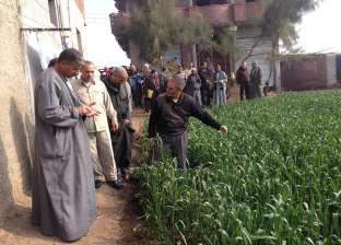 """""""زراعة كفرالشيخ"""" تستمع لاستفسارات مزارعي سيدي سالم حول محصول القمح"""
