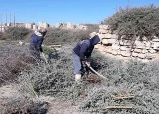 """""""آثار الإسكندرية"""" تبدأ في إزالة الحشائش والمخلفات من منطقة """"أبو مينا"""""""
