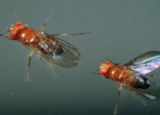 مع انتشار الذباب.. هل تنقل حشرات الصيف فيروس كورونا للبشر؟