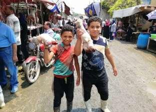 """أطفال يعملون فى """"المدبح"""": """"الجزارة فن مش سن"""""""