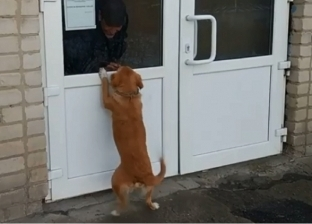 """""""كلب"""" يعقر طالبة داخل الحرم الجامعي في المنيا"""