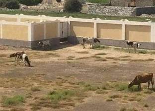 """من قاعة أفراح لـ""""مزرعة مواشي"""".. المدارس تحول نشاطها في الصيف"""