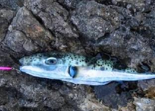 """""""السمكة القاتلة"""" تعبر قناة السويس وتستقبل الصيف على شواطيء المتوسط"""