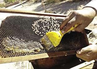 ضبط 2 طن عسل جلوكوز مجهولة المصدر بمخزن مواد غذاىية بالغردقة