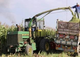 «فاينانشيال للدراسات»: حرب طاحنة بين 6 شركات استيراد مصرية للسيطرة على سوق الذرة