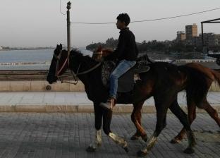 """""""بحبهم ومفيش شغل"""".. مصطفى يعمل مع الخيول بـ20 جنيها في اليوم"""