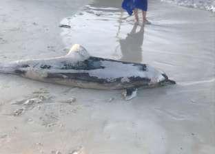 البيئة تكشف أسباب نفوق 11 دولفين: الشعاب المرجانية قتلتها