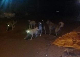 """""""وسط الإسكندرية"""" يشن حملة مكبرة للقضاء على """"الكلاب الضالة"""""""