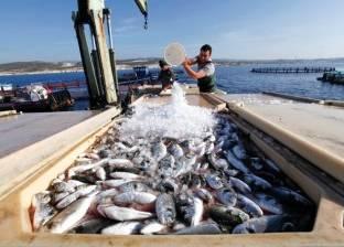 الإحصاء: 2.5% زيادة في إنتاج الأسماك بـ2015