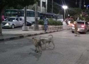 محافظ الغربية يوجه بحملات لمواجهة الكلاب المسعورة في زفتى