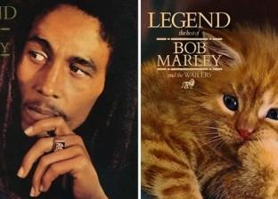 بالصور| أمريكية تستبدل صور المطربين على أغلفة الألبومات الفنية بقطط