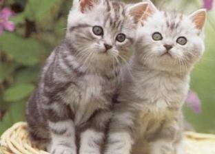 عمليات التعقيم تنجح في خفض عدد القطط الضالة بكندا