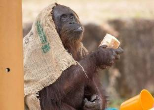 دراسة: أنثى القرد لا تثق في رجلها