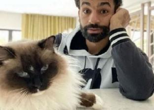معلومات عن قط «صلاح».. ينتمي لسلالة نادرة وسعره 15 ألف جنيه
