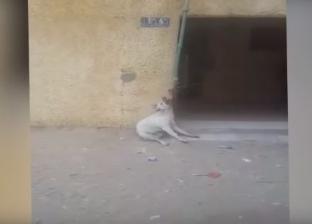 ضربوه حتى الموت.. حفل قتل جماعى لكلب فى مدينة السلام وسط الشارع